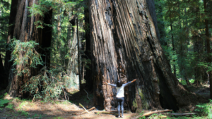 Redwoods, Racism, Community
